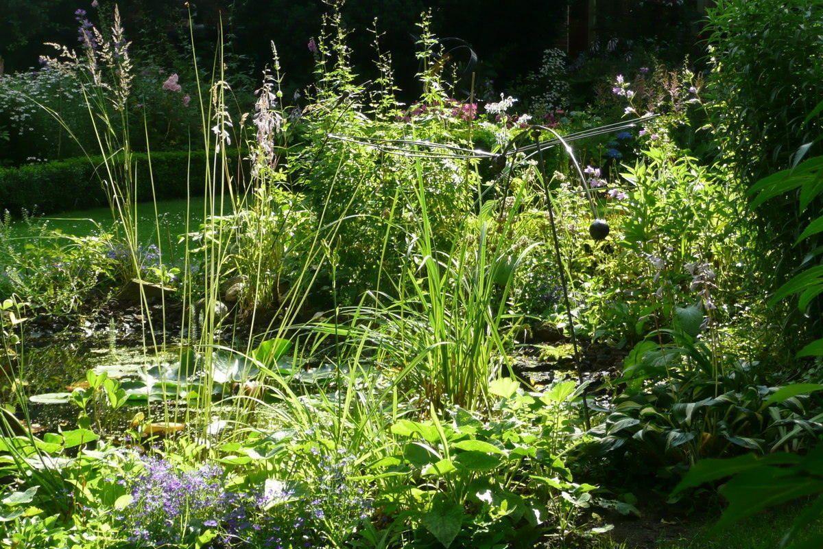 Natuurlijkebeplantingrondvijver