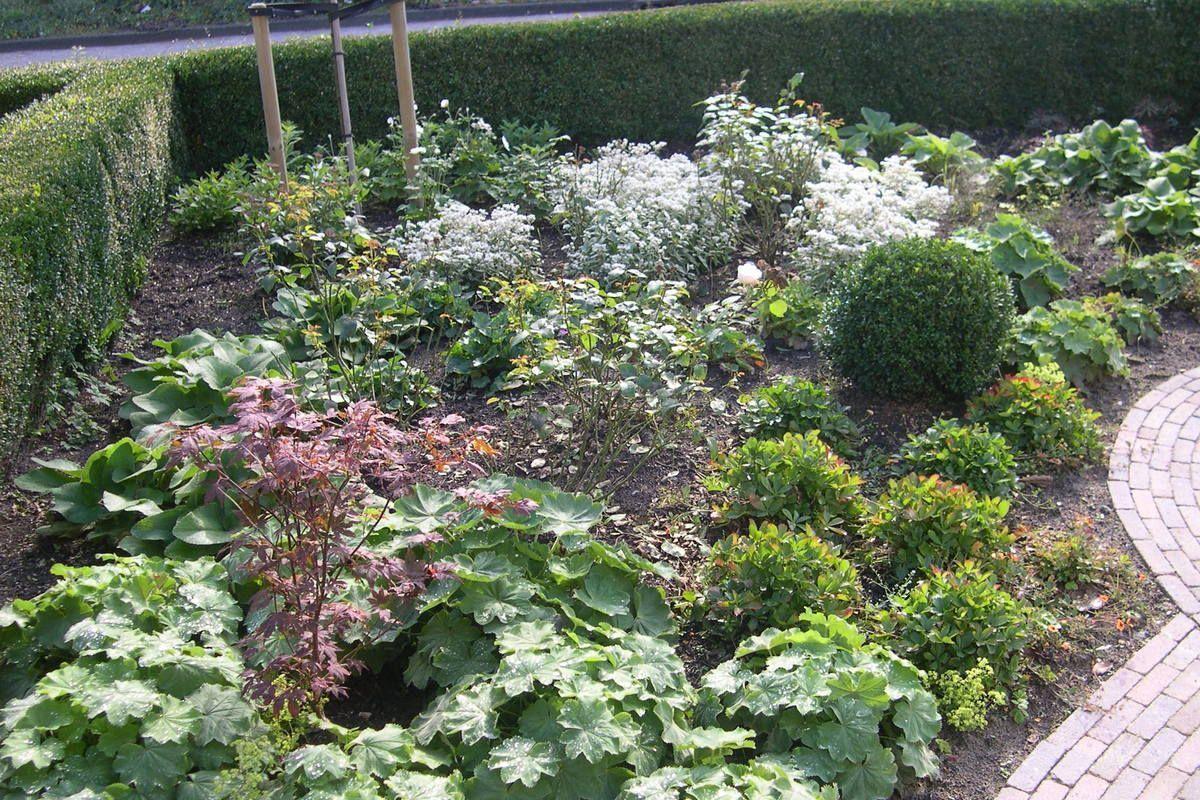 Vasteplantenenrozenborder