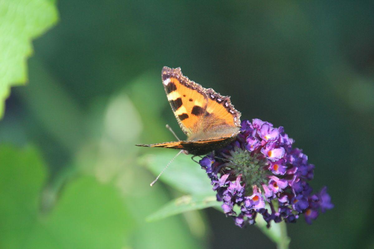 Vlindersdooreengerichtbeplantingsplan