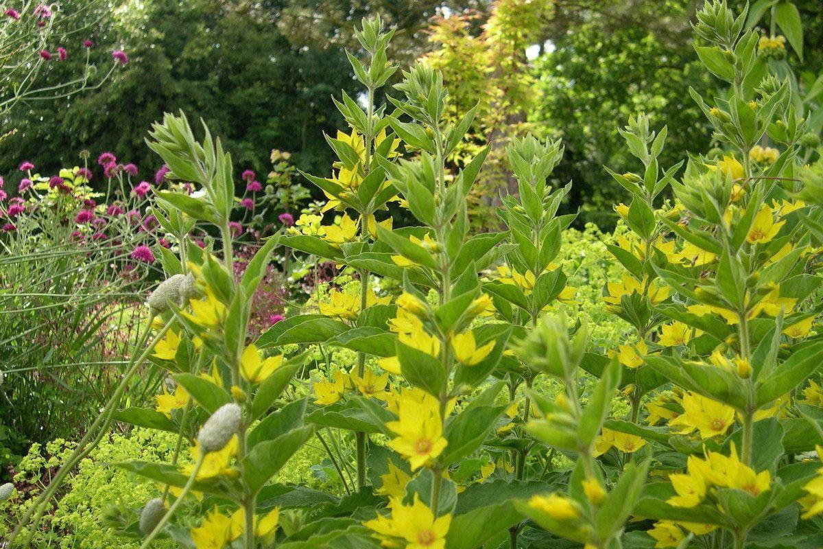 Veelbloemenenkleurmeteengoedbeplantingsplan